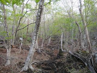 5.徐かなること林の如し