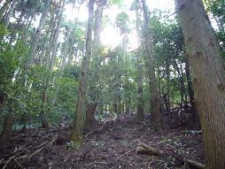 杉の急斜面