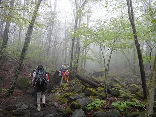 8.深い森