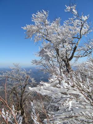 10雪の桜